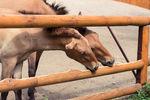 Киевлян приглашают в зоопарк скакать на лошадях