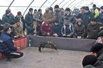 Петушиные бои в Крыму: сражаются по 4 часа, могут отбиться от лисы и оставляют синяки хозяину