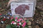 Кладбище домашних животных: мраморные памятники и бриллианты из праха