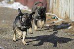В Луганской области во дворе школы бродячие собаки покусали ребенка
