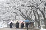 Японию охватил транспортный хаос из-за сильных снегопадов