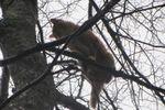 Спасатели в Киеве сняли с дерева голубоглазого кота