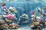 В Ираке обнаружили обитаемый тропический коралловый риф