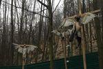 Янукович не занимался оккультизмом – эколог прокомментировал распятых птиц в Межигорье