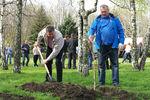 Киев засадят дубами и вишнями
