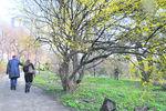 В Киеве можно увидеть дерево Будды, сказочные подснежники и пираний