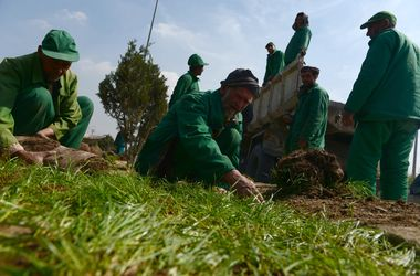 В Афганистане сажают траву