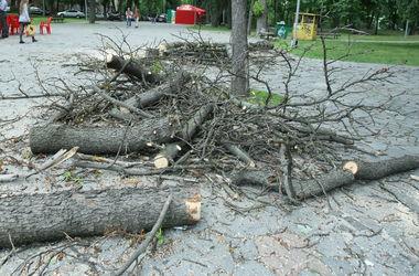 В киевском парке незаконно вырубают деревья и уничтожают озера – прокуратура