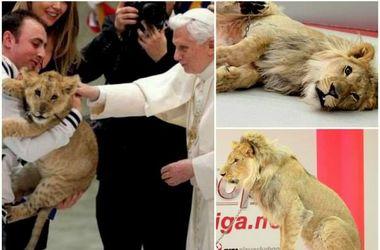 Лев, который гулял сегодня по Киеву, принадлежит Папе Римскому