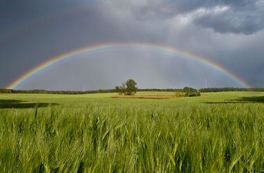 Синоптики обещают теплую погоду с дождями и грозами