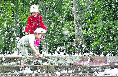 В Киеве посадят тополя без пуха