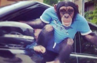 Примат в голубой футболке развлекал водителей в пробке на Институтской