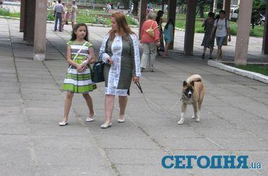 Во Львове на избирательные участки приходят с собаками, детьми и ромашками