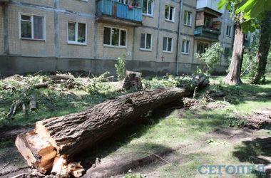 В Киеве из-за непогоды на дом рухнул огромный тополь