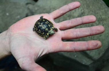 В Киевском зоопарке отпразднуют День черепах