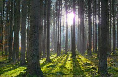 В Херсонской области горели 140 га леса