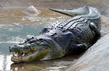 В Австралии крокодил съел туриста в национальном парке