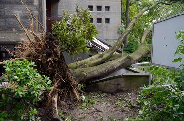 В Германии непогода наломала дров и убила пять человек