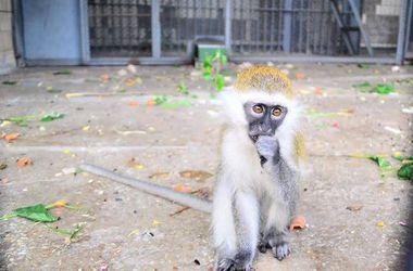 В Киевском зоопарке пройдет День обезьян