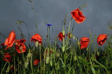 В субботу по Украине ожидаются дожди с грозами