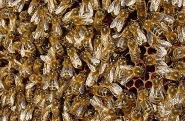 """В """"Борисполе"""" самолет захватили пчелы"""