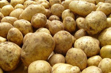 Украинские эксперты не нашли паразитов в запрещенной Россией картошке