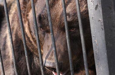 На Полтавщине медведь откусил ребенку руку