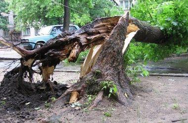 В Харькове сильный ветер повалил 25 деревьев
