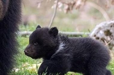 В швейцарском зоопарке убили медвежонка