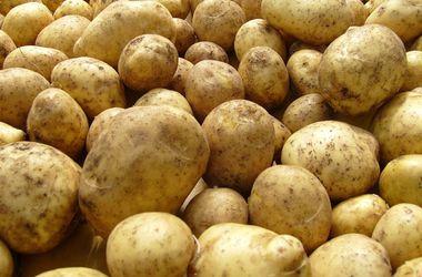 Беларусь по просьбе РФ запретила украинскую картошку
