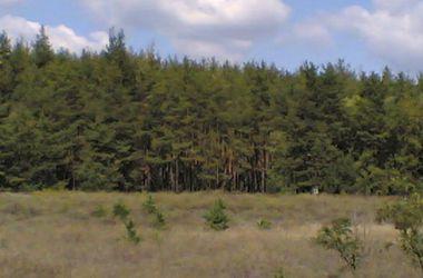 В лесах возле Славянска находят шприцы и десятки могил террористов
