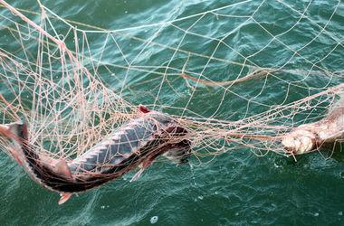 Полтавским браконьерам грозит тюрьма за массовый вылов рыбы