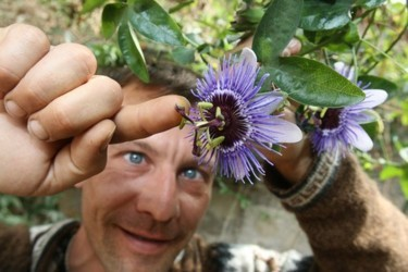 цветы маракуйя фото