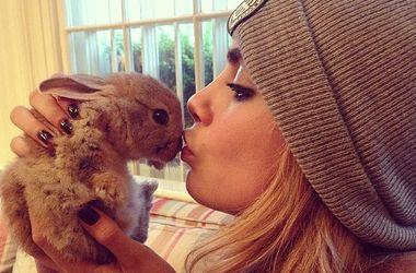 Модель Кара Делевинь наняла няню для кролика