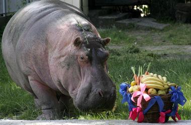 Как в Киевском зоопарке будут поздравлять животных-долгожителей (фото)