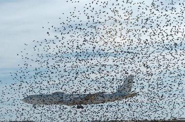 Стая птиц не пустила самолет в Индию
