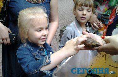 """Погладить гигантских улиток-""""косметологов"""" и подержать тараканов – Киевский зоопарк познакомил детей с редкими созданиями"""