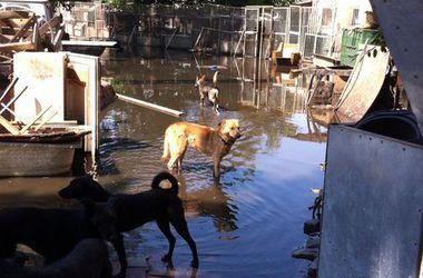 В Одессе затопило приют для бездомных животных