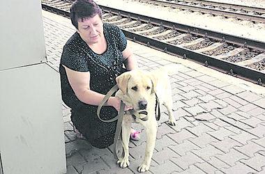 Киевляне-волонтеры спасают собак-беженцев с Востока