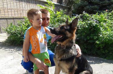 В Запорожской области собака нашла пропавшего мальчика