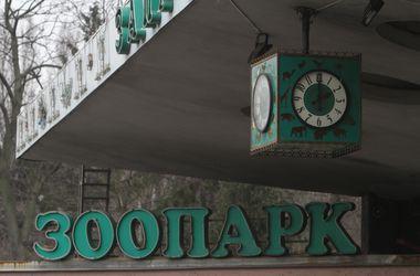 В Киевском зоопарке похвастались, как много животных у них родилось