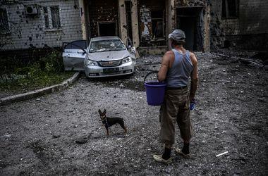 Волонтеры спасают брошенных животных на востоке Украины