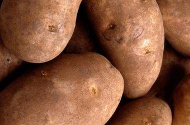Беларусь передумала запрещать украинскую картошку