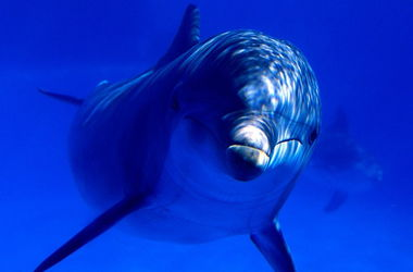 Из Донецка в Харьков перевезли дельфинов