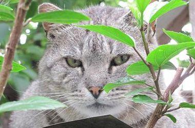 Во Львове защитили уличных котов от жестокости