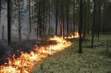 Днепропетровцам запретили ходить в лес
