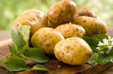 Чем полезен обычный картофель