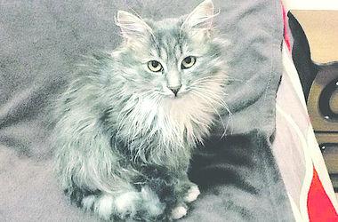 Киевская кошка упала с 24-го этажа, выжила и стала рекордсменкой