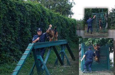 В Кривом Роге готовят собак для отправки в зону АТО