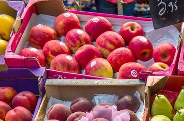 Польша просит США купить запрещенные Россией яблоки